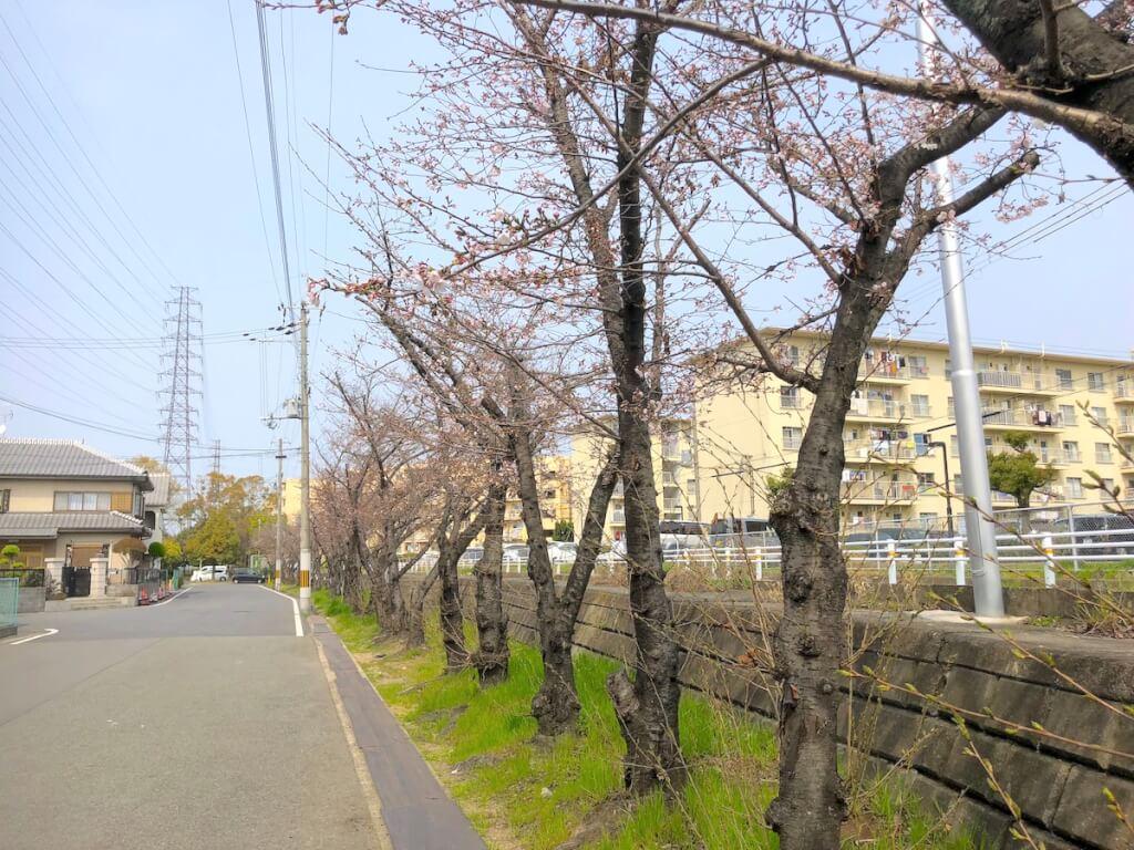鳥飼上 桜並木