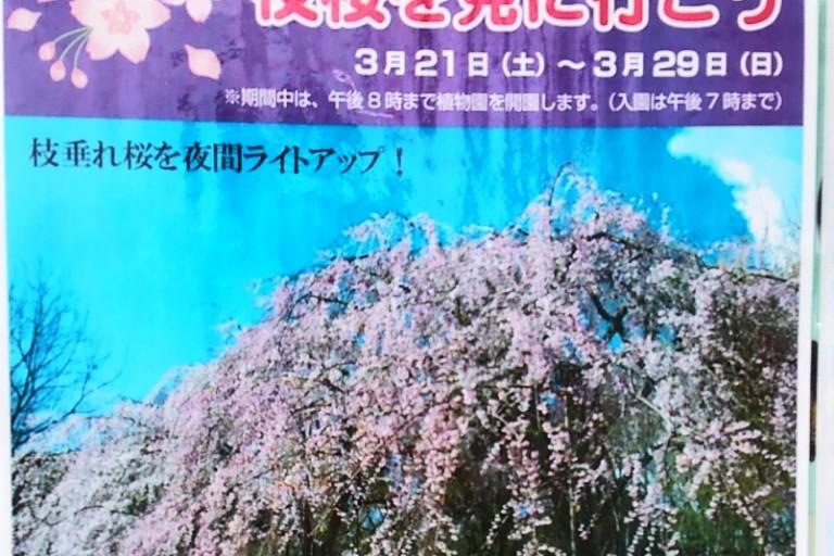 夜桜ポスター