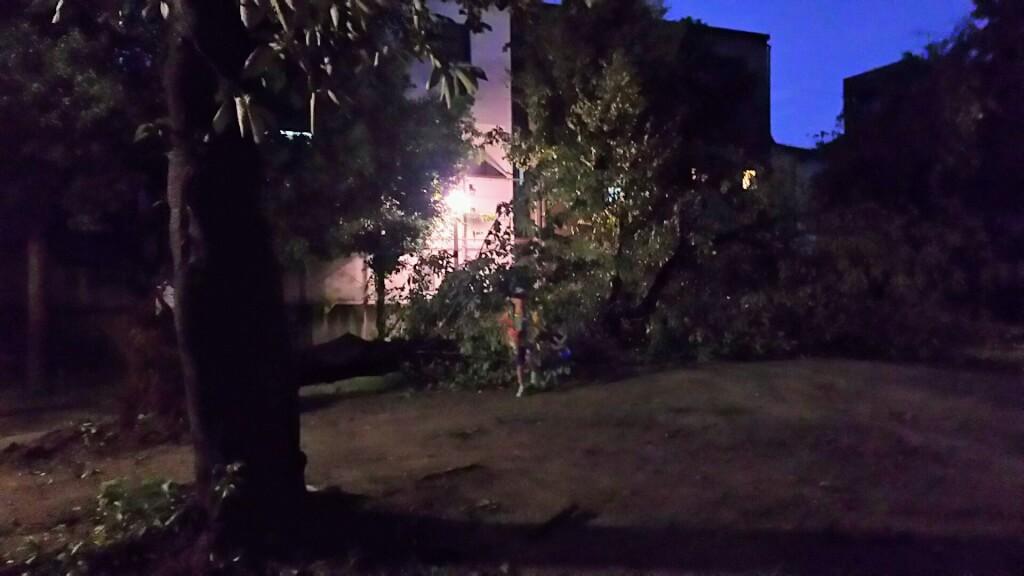 2018年9月4日 19時前後の街の様子 倒れた公園の 大木