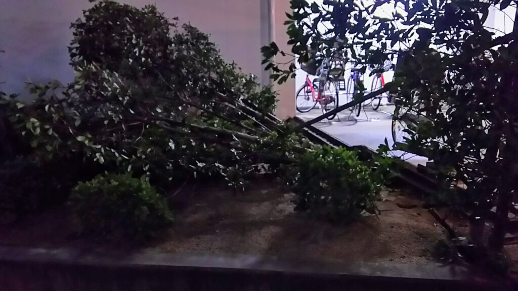 2018年9月4日 19時前後の街の様子 なぎ倒されている 植木