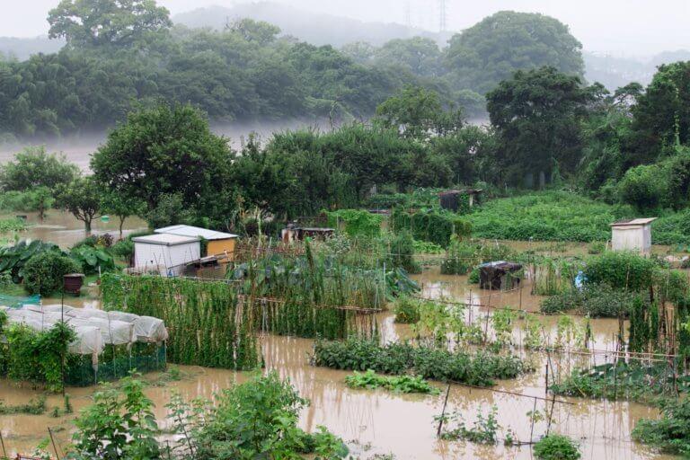 水没した畑