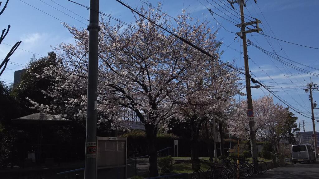 塚本駅前公園 桜