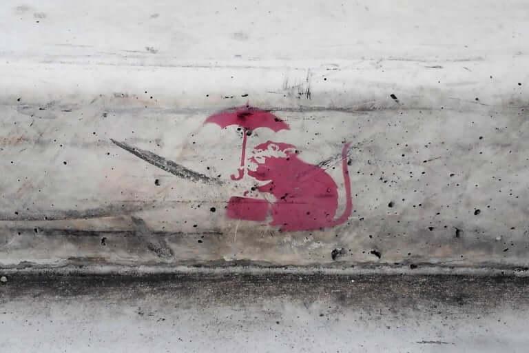 歩道のネズミ