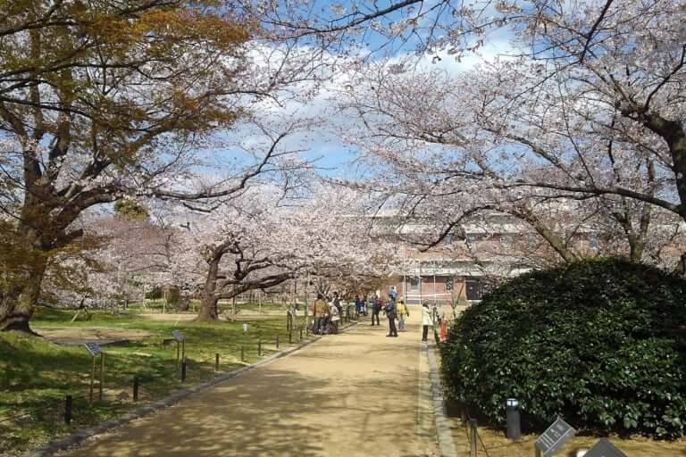 浄水場内の桜