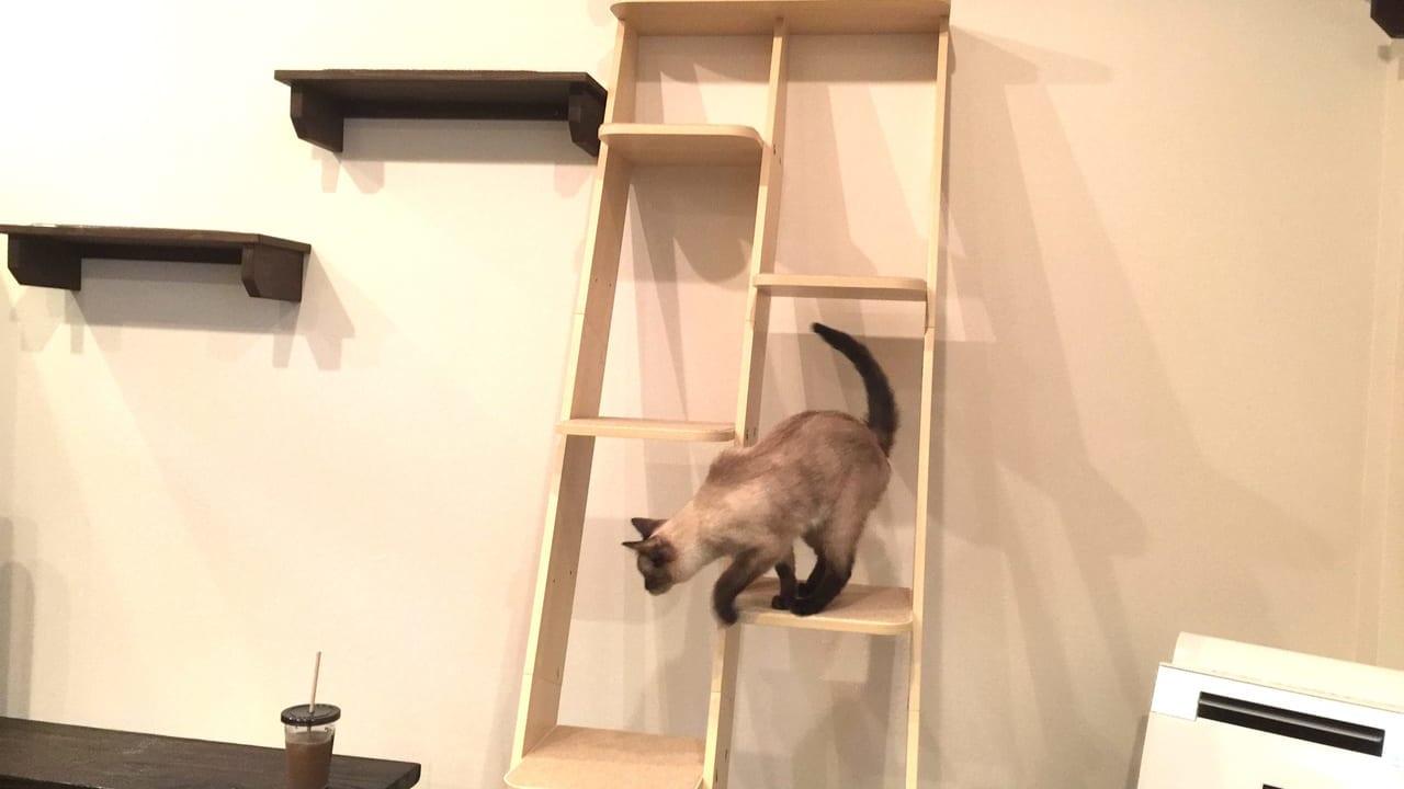 猫カフェリアン猫1