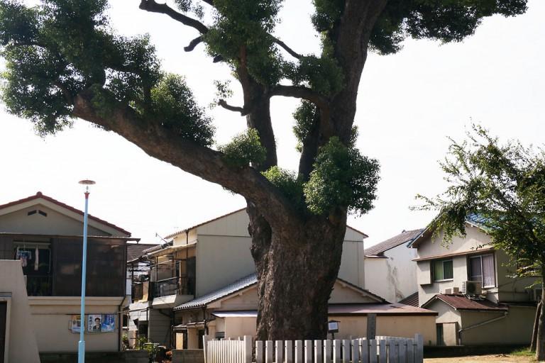 須賀森公園