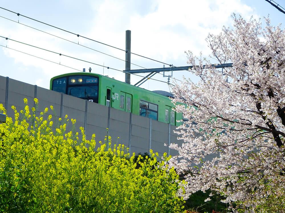 桜おおさか東線