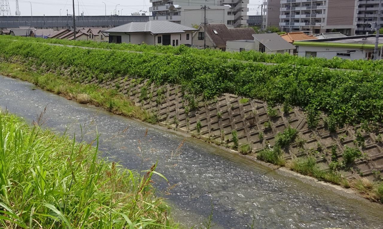 天神川は天井川