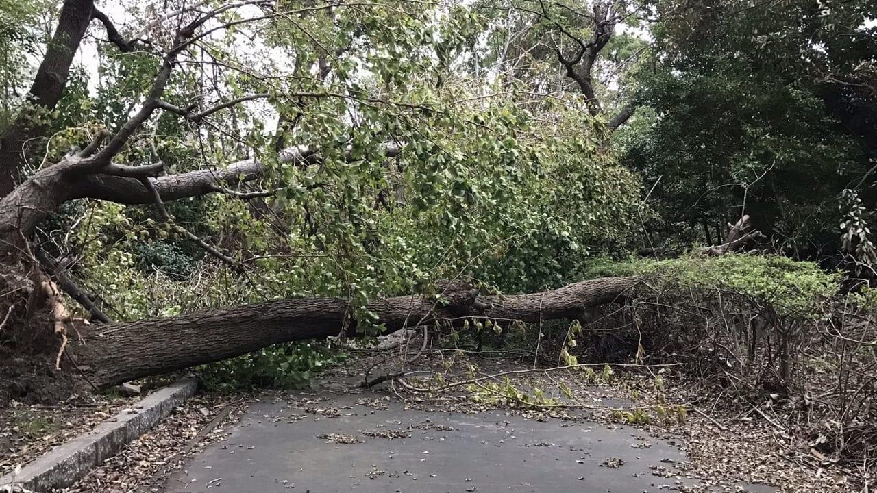 多摩市倒木