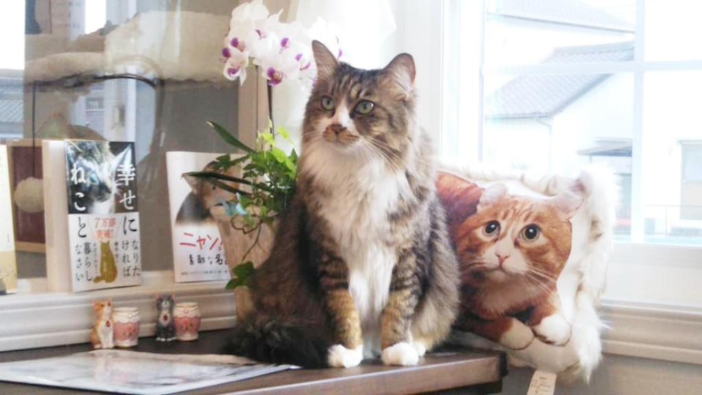 【岡崎市】開店♪岡崎市に保護猫カフェAelu(アエル)がオープンしました。とってもお洒落で可愛い建物です。