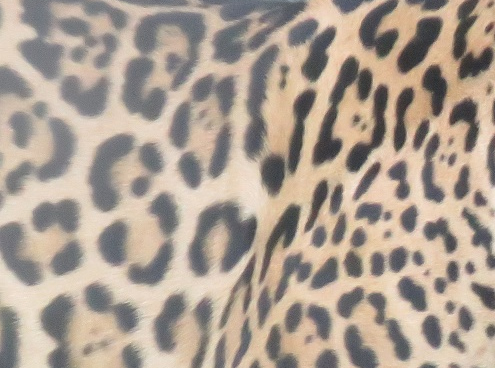 ジャガーの柄
